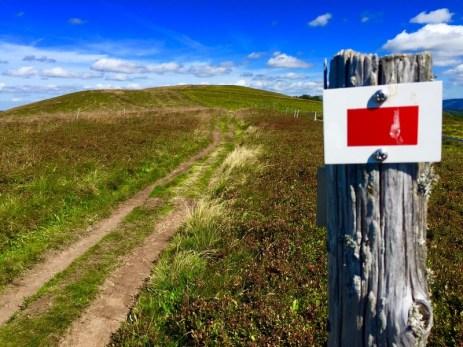 Trail sur les crêtes vosgiennes (14)
