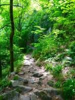 Trail sur les crêtes vosgiennes (2)