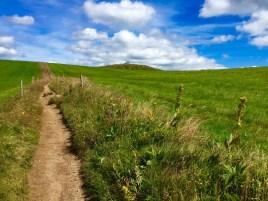 Trail sur les crêtes vosgiennes (9)